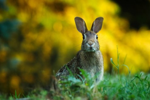 rabbit-1882699_1920