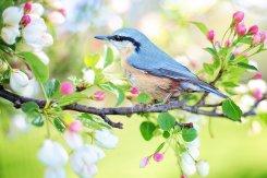 spring-bird-2295431_1920-1